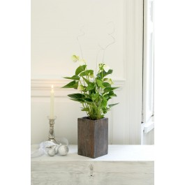 FLORIST CHOICE SINGLE PLANT, FLORIST CHOICE SINGLE PLANT