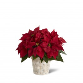 The FTD Red Poinsetta Basket, The FTD Red Poinsetta Basket