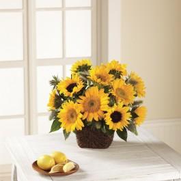 FTD® Perfect Sun™ Bouquet, FTD® Perfect Sun™ Bouquet