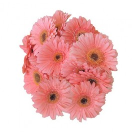 Gerbera Bunch - Pink(Other colours available), Gerbera Bunch - Pink(Other colours available)