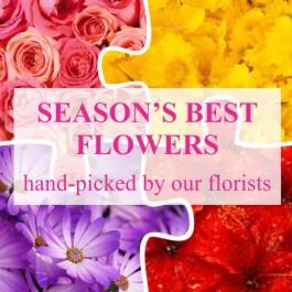 Florist Choice, Florist Choice