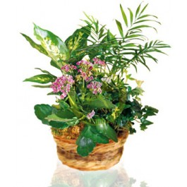Arrangement of Plants, Arrangement of Plants