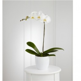 White Orchid Planter, White Orchid Planter