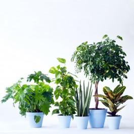 Single Plant, Single Plant