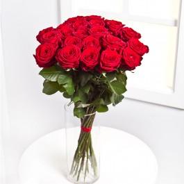 25 Rosas rojas, 25 Rosas rojas