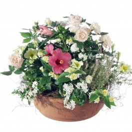 Tu es toujours dans mes pensées (jardinière de plantes d'ext, Tu es toujours dans mes pensées (jardinière de plantes d'ext