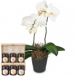White Orchid (Phalaenopsis) in cachepot with honey gift set, White Orchid (Phalaenopsis) in cachepot with honey gift set