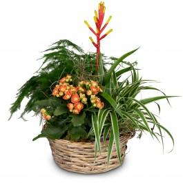 Symphony of plants, Symphony of plants