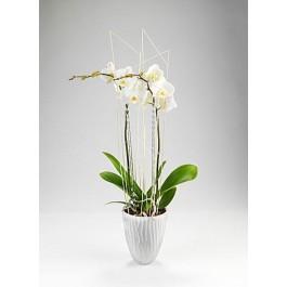 Orkide, Orkide