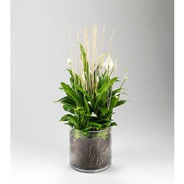 Plante, Plante