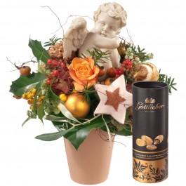 Little Angel (piqué) avec amandes au cacao Gottlieber, Little Angel (piqué) avec amandes au cacao Gottlieber