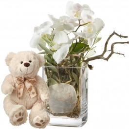 Des orchidées, autrement vase inclus avec ours en peluche (b, Des orchidées, autrement vase inclus avec ours en peluche (b