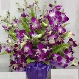 Arrangement of Flowering plants, Arrangement of Flowering plants