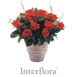 Ramo de rosas rojas (jarrón incluido), Ramo de rosas rojas (jarrón incluido)