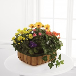 FTD Gentle Blossoms Basket, FTD Gentle Blossoms Basket