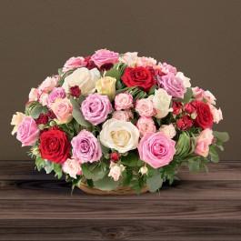 Rosae multicolore, Rosae multicolore