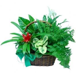 Kompozycja z roślin doniczkowych, Kompozycja z roślin doniczkowych