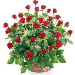 Kosz 30 czerwonych róż, Kosz 30 czerwonych róż