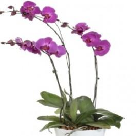 Flowering Plants, Flowering Plants