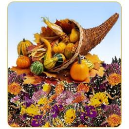 Ramo de Sorpresa / Thanksgiving, Ramo de Sorpresa / Thanksgiving