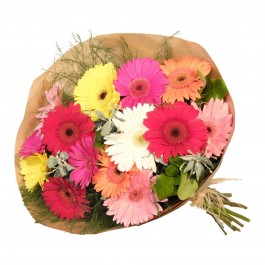 Gerbera Bunch Mixed, Gerbera Bunch Mixed