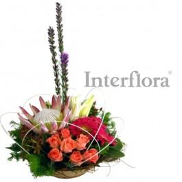 Provocative Protea, Provocative Protea