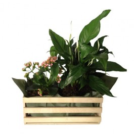 Mixed Plants In Box (Subject to availability), Mixed Plants In Box (Subject to availability)