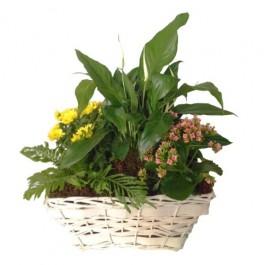 Mixed Plants In Basket, Mixed Plants In Basket