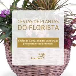 Cesta de plantas do florista, Cestas de Várias plantas