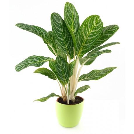 Green Plant in flowerpot, Green Plant in flowerpot