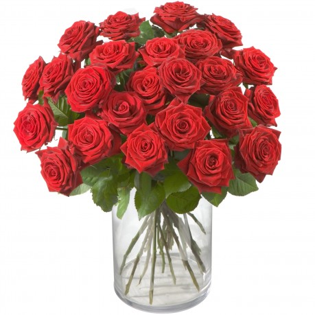 24 roses rouges, 24 roses rouges