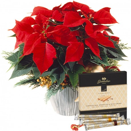 Etoile de Noël décorée avec gaufrettes Gottlieber Hüppen «Sp, Etoile de Noël décorée avec gaufrettes Gottlieber Hüppen «Sp