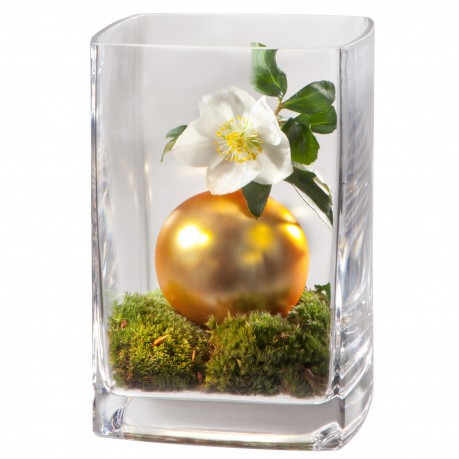 Perle de l'Avent en vase, Perle de l'Avent en vase