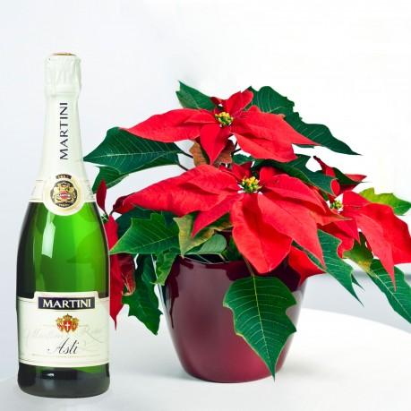 Planta Poinsettia y vino achampanado Martini Asti , Planta Poinsettia y vino achampanado Martini Asti