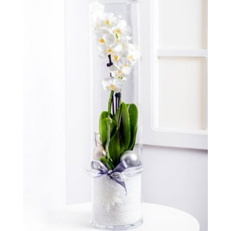 Modern Christmas Arrangement with Phalaenopsis, Modern Christmas Arrangement with Phalaenopsis