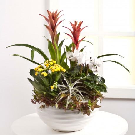 Arrangement of Plants, Arrangement of Plants