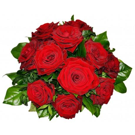 Dosen Red roses, Dosen Red roses