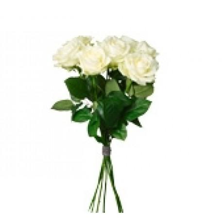 White Roses, White Roses