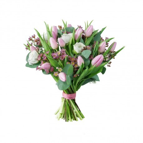 Pink & White Tulips, Pink & White Tulips