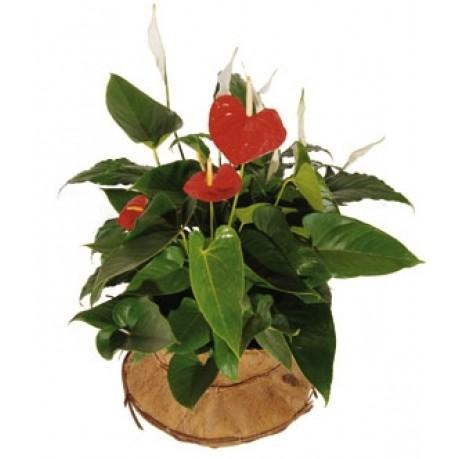 Composición vegetal, Composición vegetal