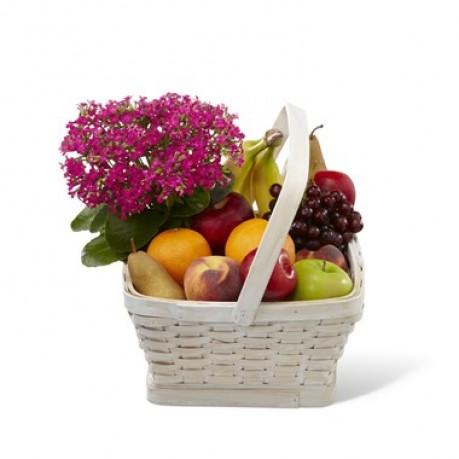 Garden Paradise Basket, Garden Paradise Basket