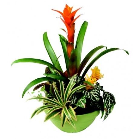 Arreglo de plantas, Arreglo de plantas