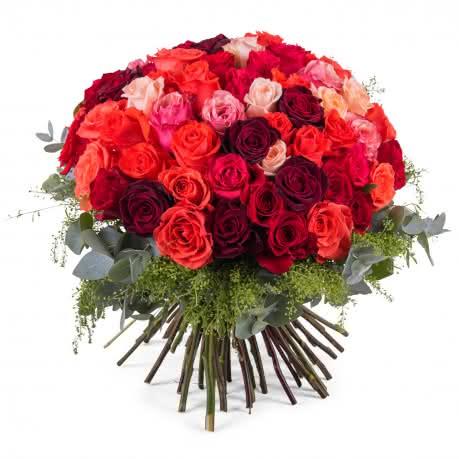 Delícia, 60 Rosas Multicor de Pé Curto
