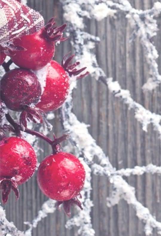 Conselhos para preparar os seus arranjos florais natalícios