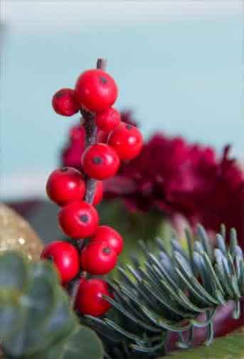 Conselhos Interflora - Origem e significado da Flor de Natal, a planta mais natalícia