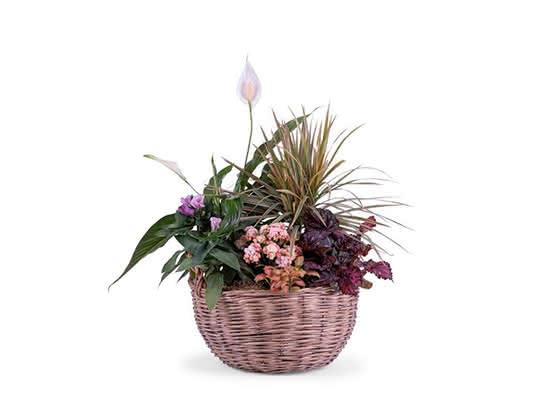 Plantas para decorar a sua casa com o estilo 'hygge'
