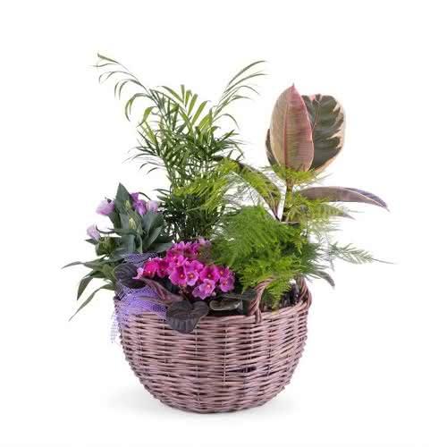 Presentes de Natal da forma de orquídeas e cestas de plantas