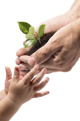 Plantas de presente: conselhos para saber qual escolher