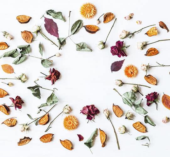Conservar as suas flores naturais para sempre