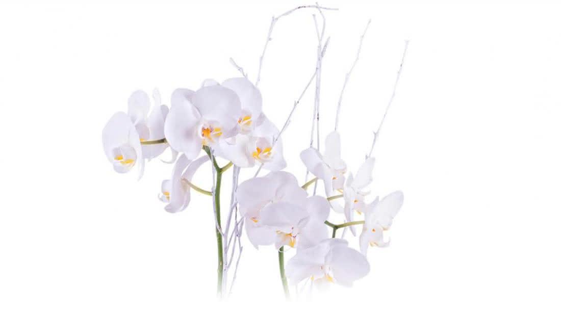 Ofereça uma orquídea no São Valentim e dê um passo em frente